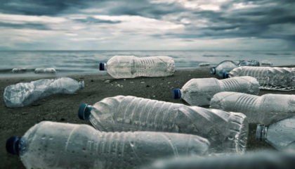 MABILE-Ecocide-loi-Climat